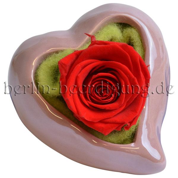Rote haltbare echte Rose in der Farbe der Liebe