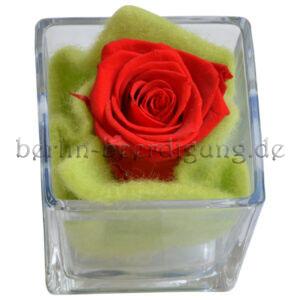 Echte rote Rose im Glaskubus | konserviert und bis zu 3 Jahre haltbar