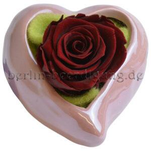 Konservierte echte Rosen