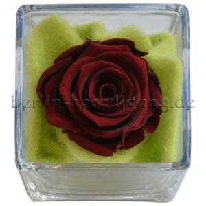 Echte dunkelrote Rose im Glaskubus | haltbarer Blütenzauber