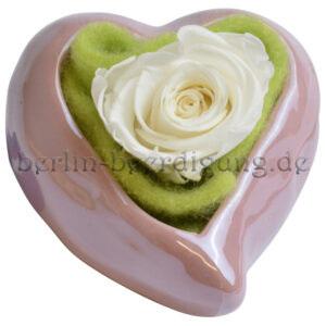 Echte weiße Rose im Herz bis zu 3 Jahre haltbar