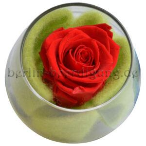 Ewige Rose in Rot Gesteck mit konservierter echte Blüte