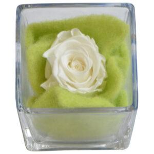 Weiße echte Rose im Glaskubus | konservierte Blüte